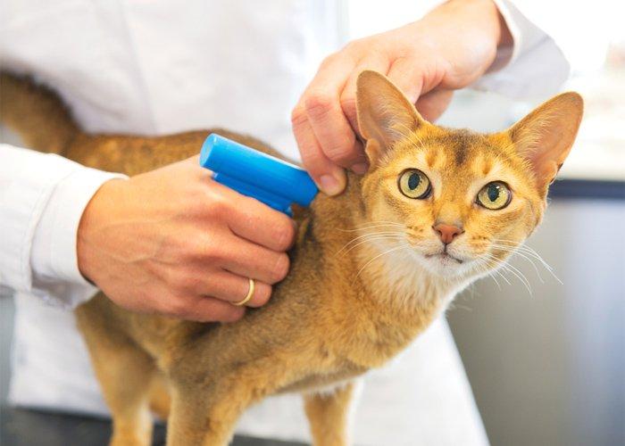 чипирование животных