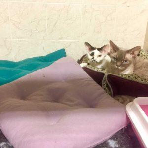гостиница дял кошек
