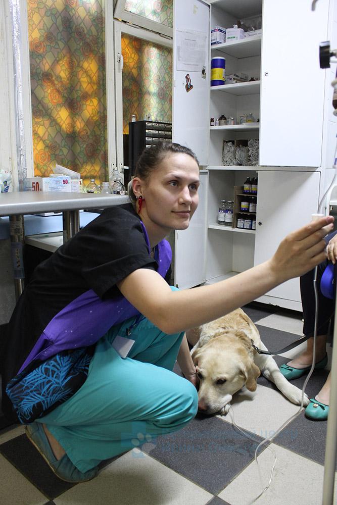 Лечение животных - фото 4