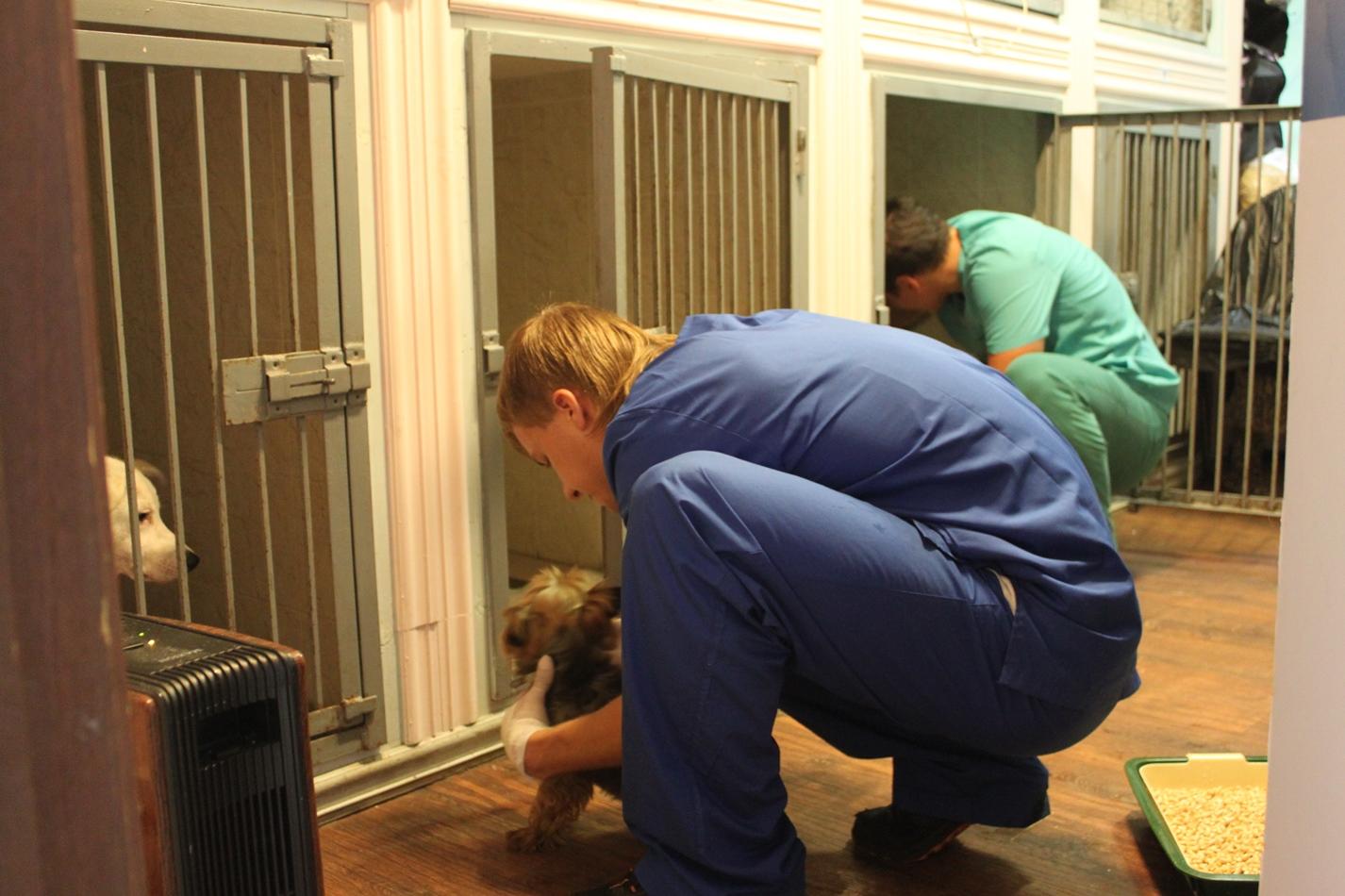 Гостиница для животных - фото 8