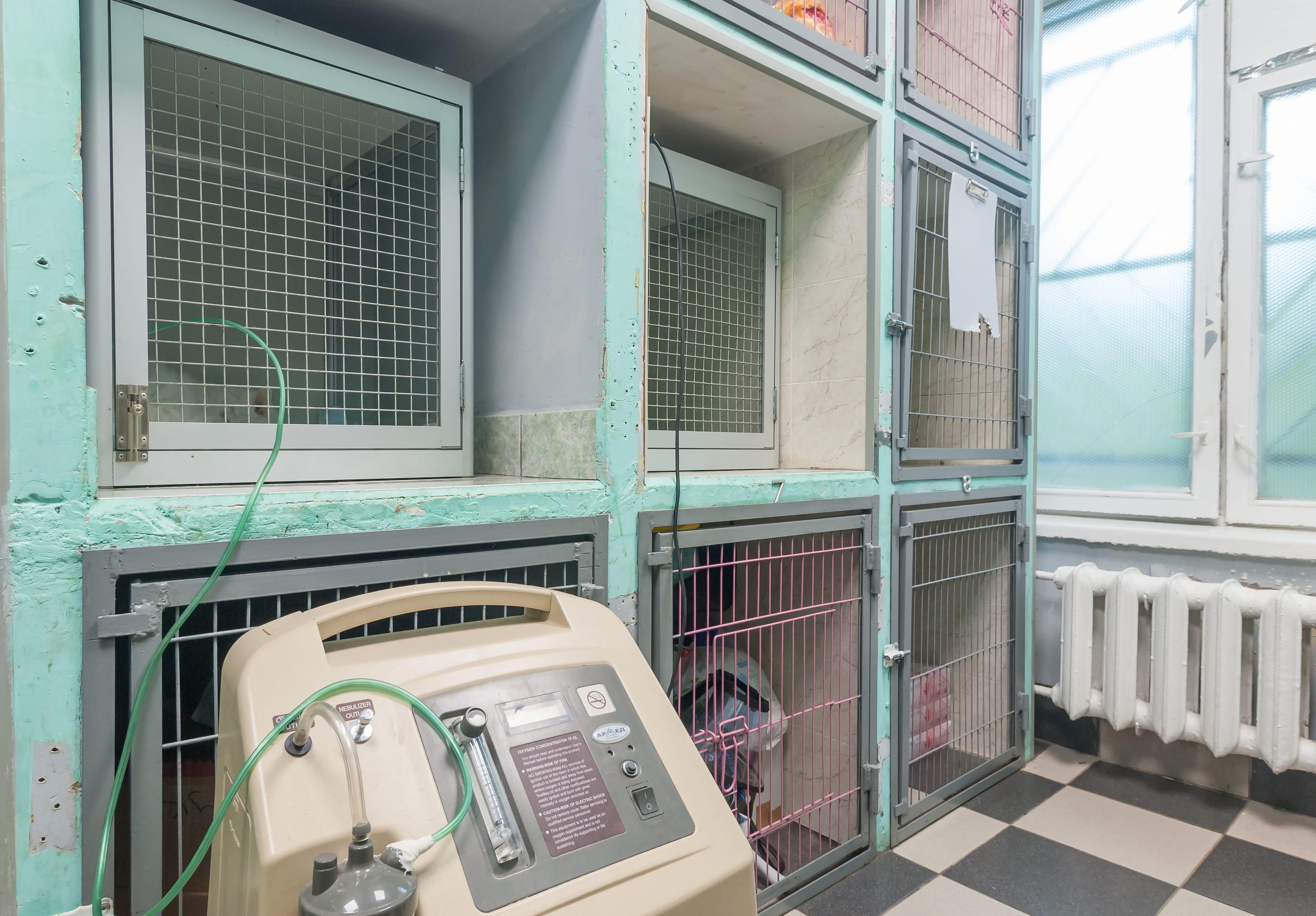 Гостиница для животных - фото 3