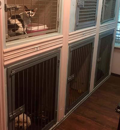 Гостиница для животных - фото 5