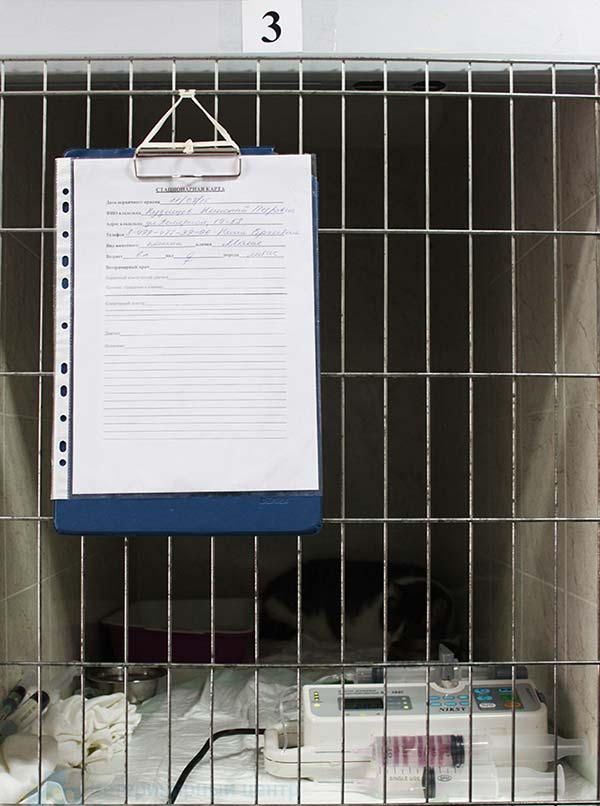 Стационар для животных - фото 2