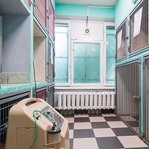 Гостиница для животных - фото 2