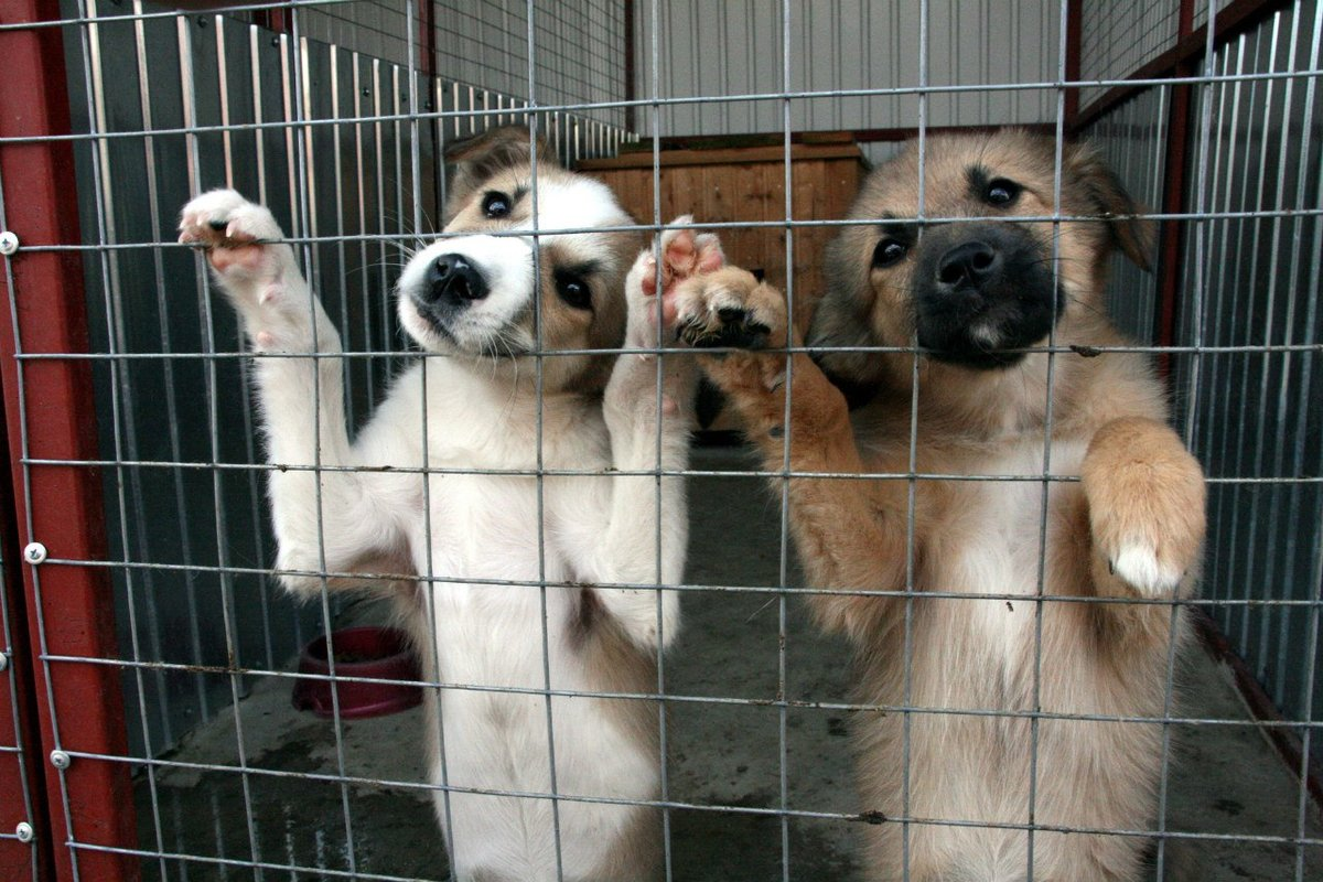 сотрудничество с ветеринарным центром