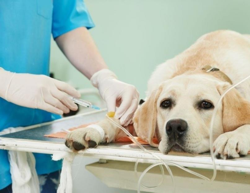 онколог для животных в Москве